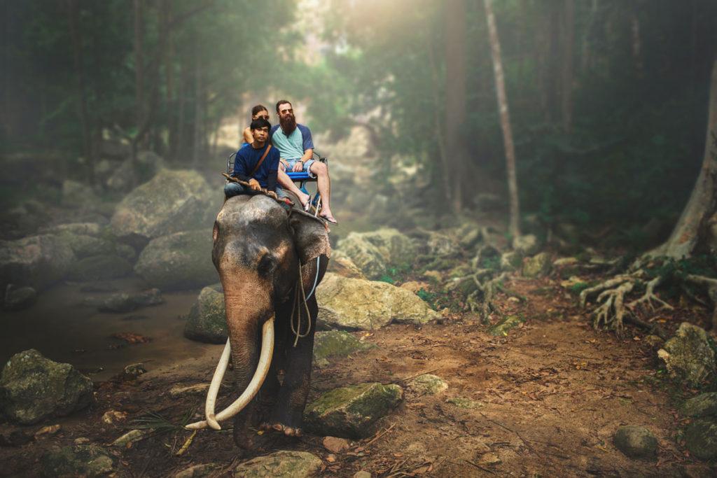 The elephant rider's key to success